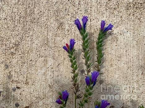 Flowers  by Michael Goyberg