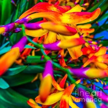 Flowers by Michael Schofield