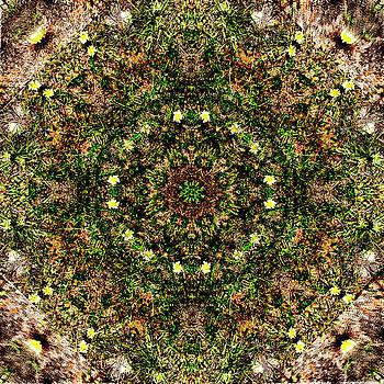Flowers mix5 by Jesus Nicolas Castanon