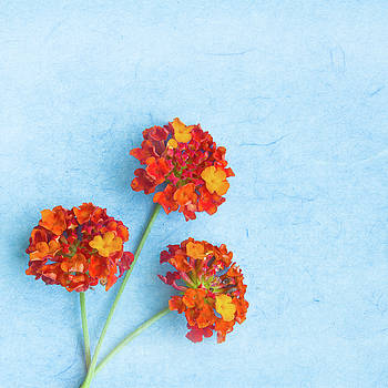 Ellie Teramoto - Spring Blooms - Red and Orange Lantana Flowers