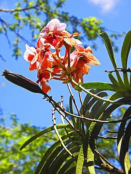 Elizabeth Hoskinson - Flowers of Waimea I