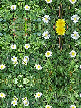 Flowers on grass - Reflected by Tin Tran
