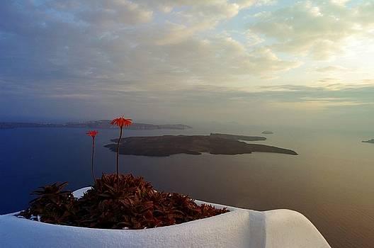 Flowers on Santorini by Yuri Hope