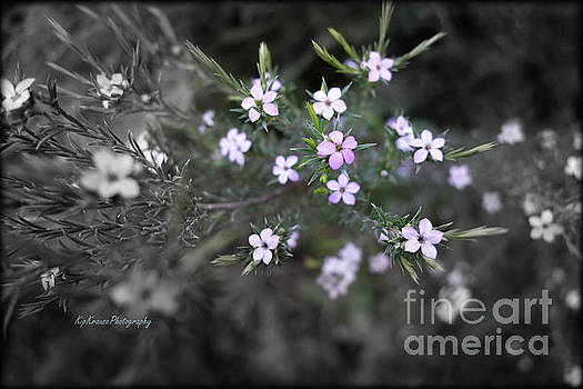Flowers on the side of the road by Kip Krause
