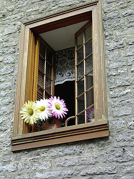 Flowers on the Sill by John Schneider