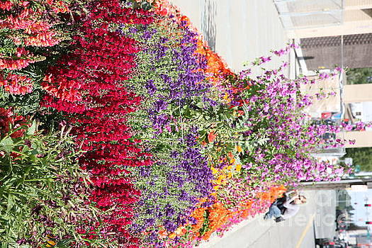 Chuck Kuhn - Flowers on the Street