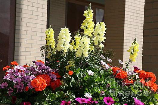 Chuck Kuhn - Flowers outdoors Assorted