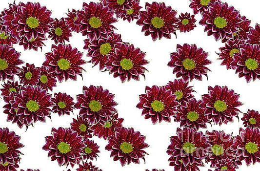 Flowers Patterns by Elvira Ladocki
