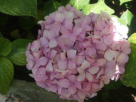 Flowers by Rihab Nasser