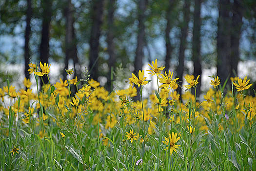 Flowers Rising in Grand Teton National Park by Bruce Gourley