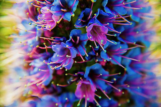Flowers by Stuart Manning