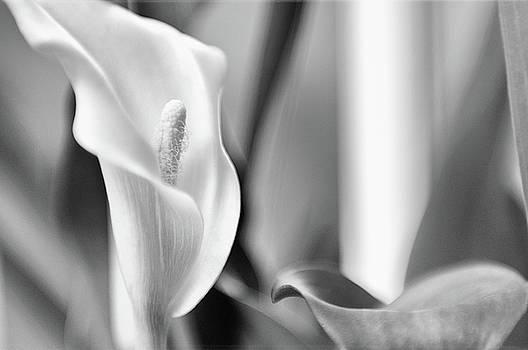 Venura Herath - Flowers