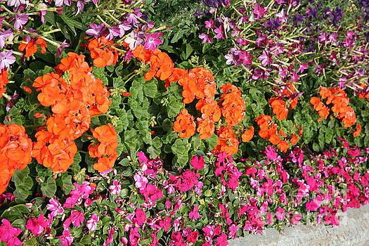 Chuck Kuhn - Flowers Walkway