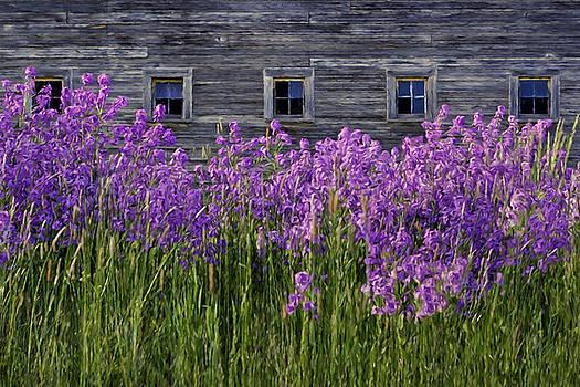 Nikolyn McDonald - Flowers - Windows in Weathered Barn - 2