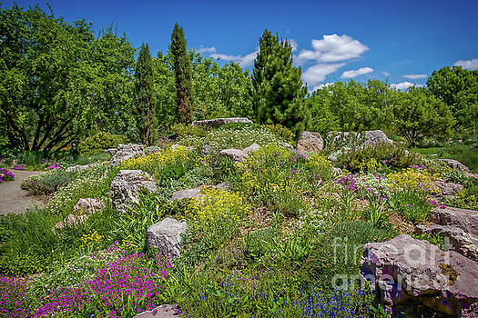 Jon Burch Photography - Flowery Hillside