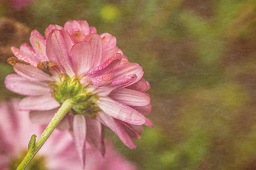 Karol Livote - Flowery
