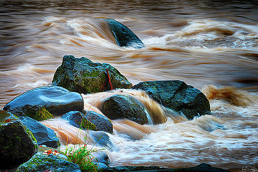 Flowing Amber by Dee Browning