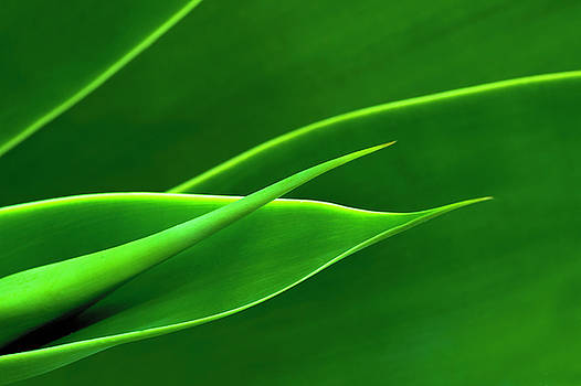 Flowing Green by Richard Macquade