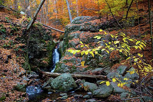 Karol Livote - Flowing Into Autumn