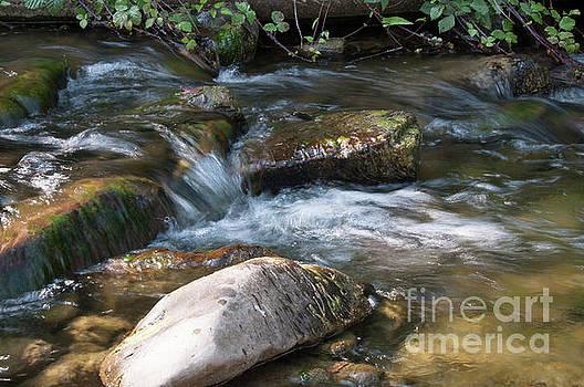 Flowing  by Leonardo Fanini