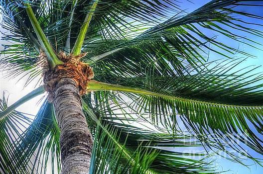Flowing palm - 0223p by Debra Kewley