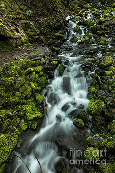 Flowing Stream Along Moss Covered Rocks in Olympic National Park by Brandon Alms