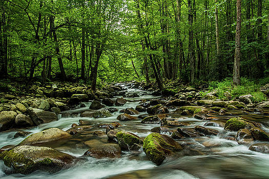 Flowing Stream Smoky Mountain National Park by Carol Mellema