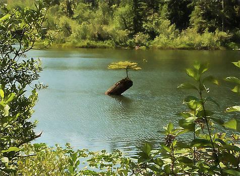 Marilyn Wilson - Tree in Fairy Lake
