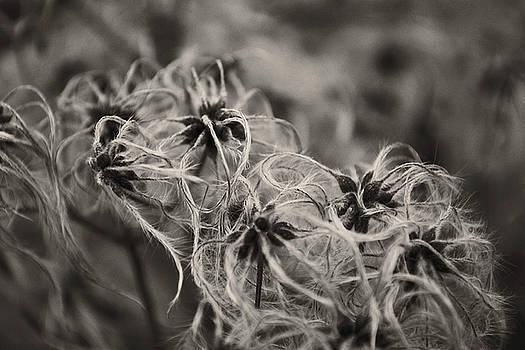 Fluffy by Jennifer Conroy