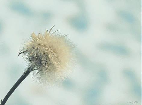 Fluffy by Marija Djedovic