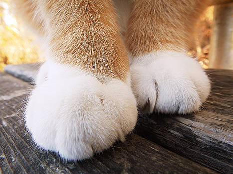 Fluffy Paws by Zinvolle Art