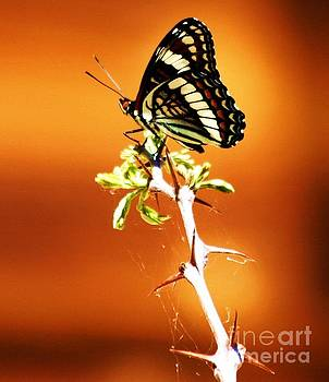 Butterfly by Donna Cain