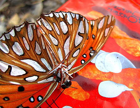 Flutterby III by Radical Reconstruction Fine Art Featuring Nancy Wood