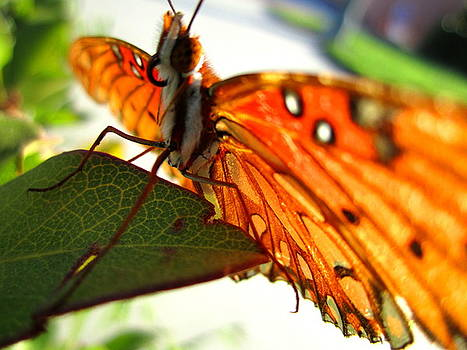 Flutterby VI by Radical Reconstruction Fine Art Featuring Nancy Wood