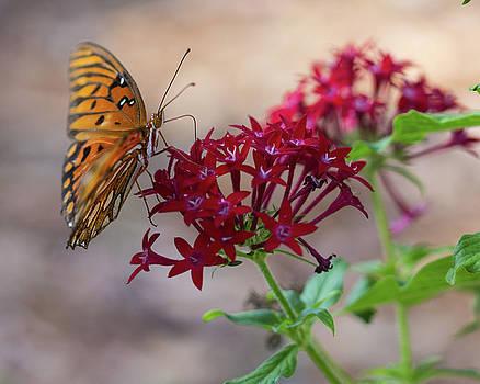 Fluttering by Terri Tiffany