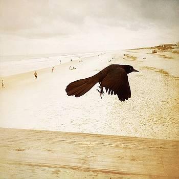 Fly Away by Lorenka Campos