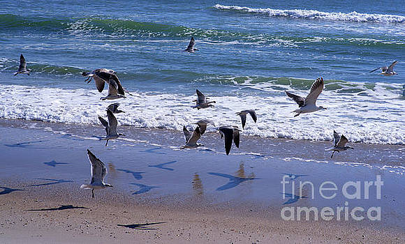 Fly Away by Margaret Koc