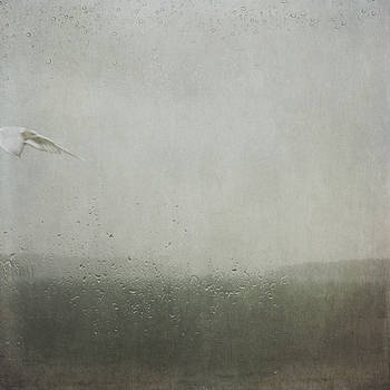 Fly Between the Raindrops by Sally Banfill