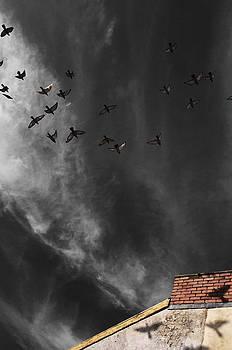 Fly By by Stephen Jones