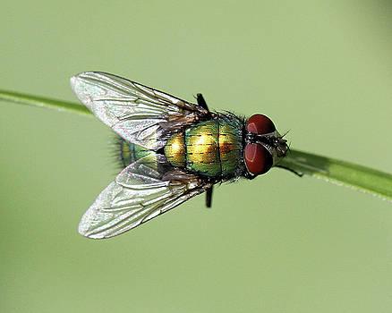 Fly by Doris Potter