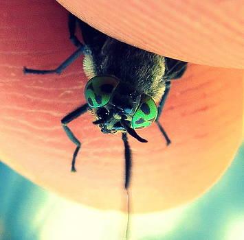 Leah Grunzke - Fly Eyes