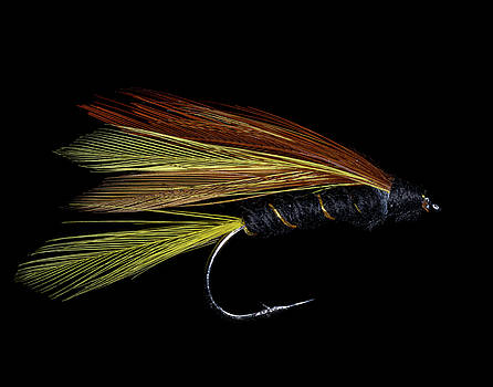Fly Fishing 3 by James Sage