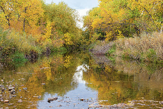 Fly Fishing Stream Reflections by James BO Insogna