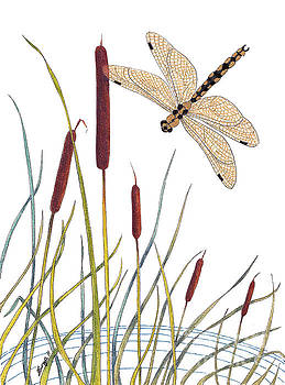 Stanza Widen - Fly High Dragonfly
