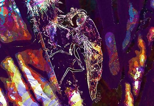 Fly Insect Eye Invertebrate  by PixBreak Art