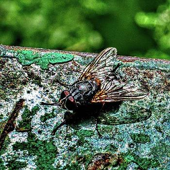 Fly #insects #fly #naturephotography by Emmanuel Varnas