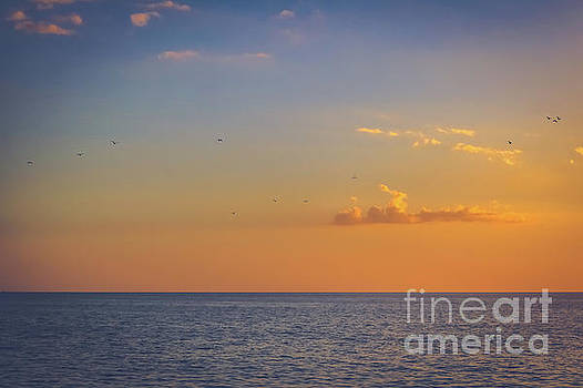 Fly into the sunset by Claudia M Photography