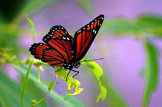 Fly Like A Butterfly by Jeffery Bennett