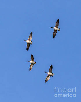 Fly Over by Phil Spitze
