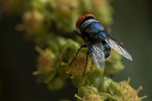 Fly  by Ramabhadran Thirupattur